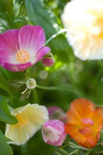 Blomster Fuglebjerggaard