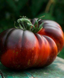 Tomatplanter Øko