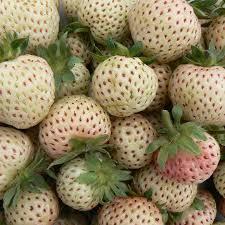 hvide jordbær