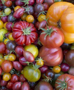 Chili & Tomat Planter Øko