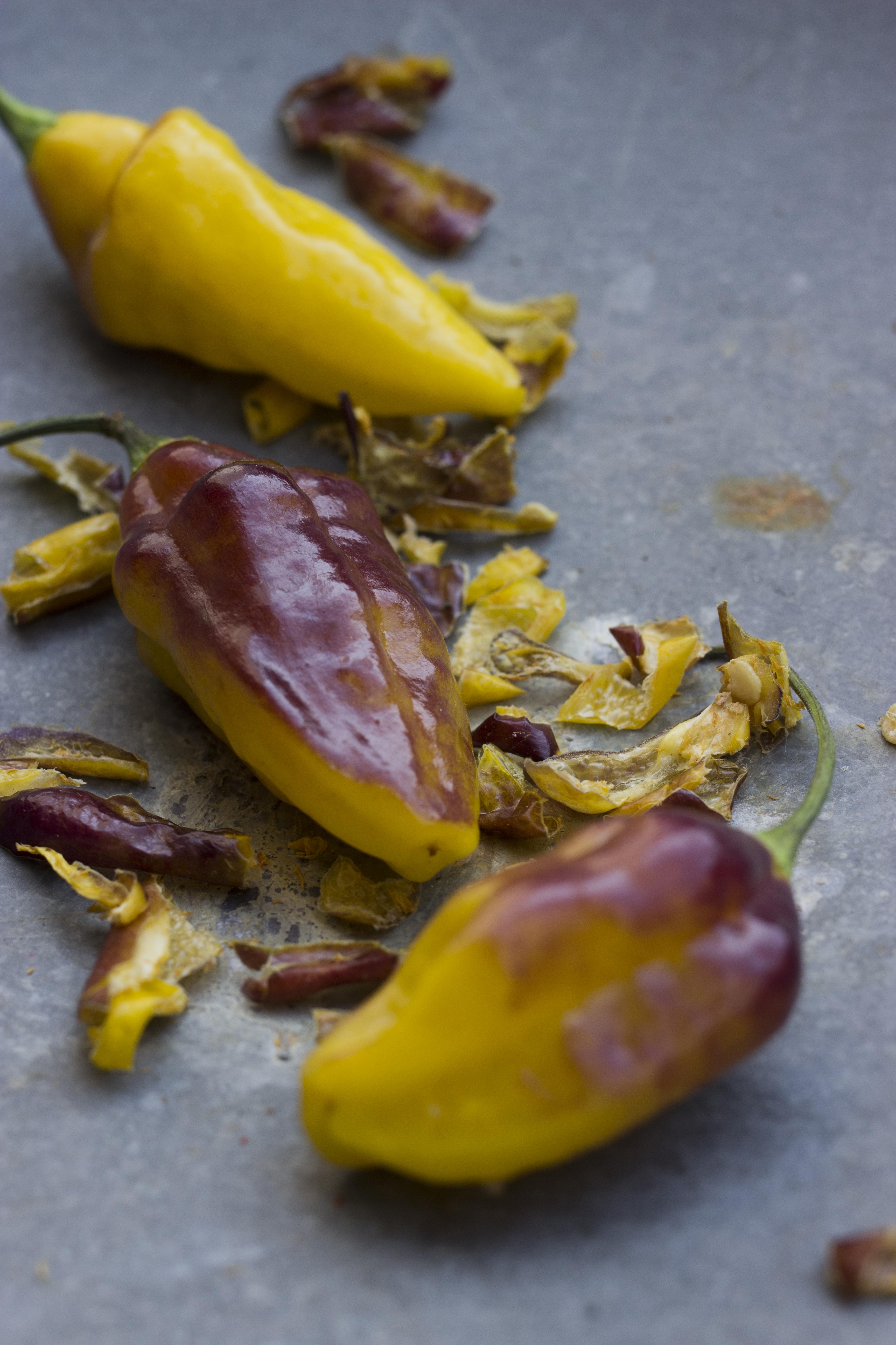 Stærke Chili Planter