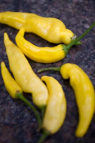 Mellem Stærke Chili planter