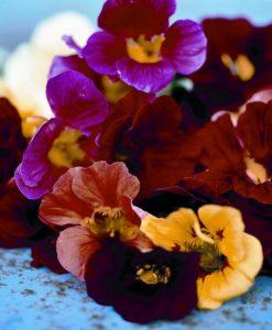 Øko Sommer Blomster Planter