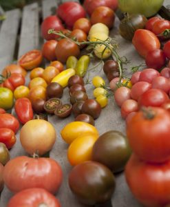 Alle de andre slags tomater