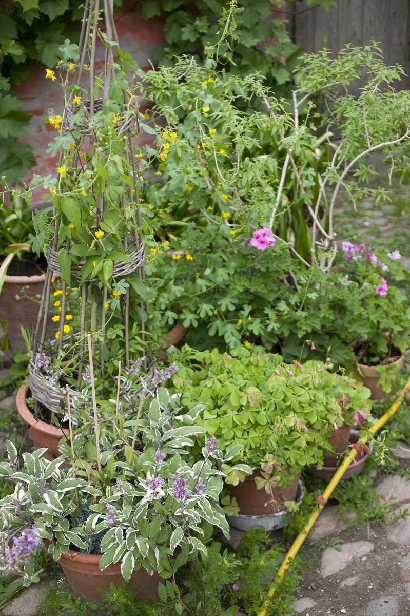 Byhaven - Urban gardening- Haven i Potter