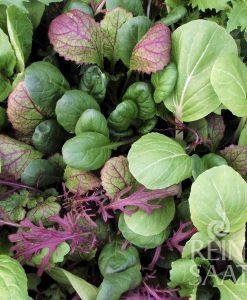 Micro Greens - Mikrogrønt