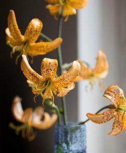 Liljer, Løg & Knold planter til forårs lægning